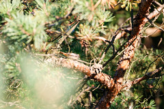 _MG_2989 (hjimmy schlter) Tags: dwirzyno wojewdztwozachodniopomorskie polen pl urlaub polen2016 ffentlich