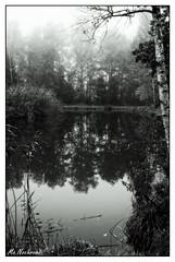 161016_0824_DxO-2 (nafot) Tags: natur wald nafot hansnater zihlschlachtsitterdorf thurgau schweiz ch