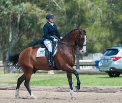 161009_Clarendon_Int_I_5923.jpg (FranzVenhaus) Tags: athletes spectatorsvolunteers dressage supporters riders horses officials riding equestrian sydney newsouthwales australia aus