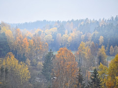 A room with an autumn view (Ingunn Eriksen) Tags: trees autumn vestby hlen norway autumncolours fog mist