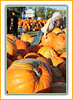 Weight Lifting (bigbrowneyez) Tags: pumpkins huge flickrorange fabulous fun stilllife pumpkinpatch abbeyhillfarm exercise weightlifting dof amazing stunning nature natura funny special edible harvest halloween preparations selection people gente beautiful bello bellissimi frame cornice ottawa canada