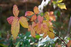 DSC_0293 (Pter_Szab) Tags: mtra matra hungary nature autumn colours mountains galyateto galyatet forest hiking nationalpark landscape