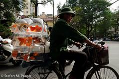 609-Viet-HANOI-351.jpg (stefan m. prager) Tags: portrait asia asien southeastasia sdostasien transport fisch vietnam hanoi verkehr fahrrad reise travelphotography reisefotografie