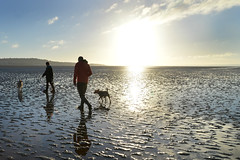 Going to Hilbre (pentlandpirate) Tags: dog walking tide darcy wirral westkirby merseyside hilbreisland deeestuary
