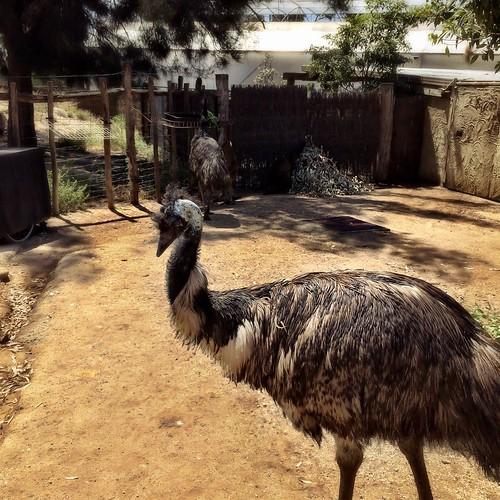 6/365 Emu