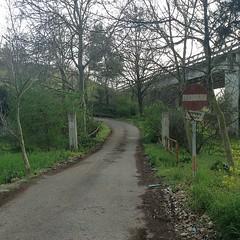 Sono passati già vent'anni. #strada #street... (simoneaversano) Tags: street bridge trees alberi strada country ponte campagna signals cartello segnale segnalistradali divieto uploaded:by=flickstagram instagram:photo=426764730784749035247096476