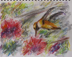hummingbird (davedehetre) Tags: usa art pencil paper sketch lawrence artwork drawing explore kansas