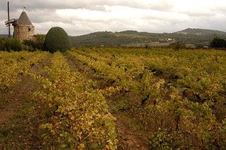 Moulin Vineyard, Luberon