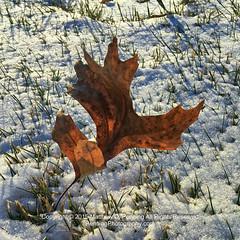 winter sun snow cold grass leaf backyard shadows freezing... (Photo: MattPenning on Flickr)