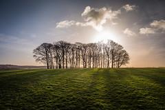 Trees (jumpandwave) Tags: park trees sky grass clouds canon temple shadows estate hill leeds backlit parkland newsam jumpandwave