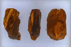 DSC_7135 (andrey.salikov) Tags: january 2015 природа музей жж nikond60 латвия рига прибалтика 180550mmf3556