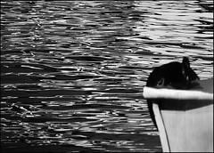 F_DSC7080-BW-Nikon D800E-Nikkor 28-300mm-May Lee  (May-margy) Tags: bw motion blur reflection boat   peoplesrepublicofchina  fujianprovince     maymargy nikkor28300mm nikond800e maylee  fdsc7080bw linesformsandlightandshadows