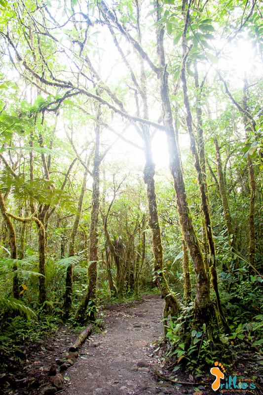 Rio Celeste (PN Vulcán Tenorio, Costa Rica)