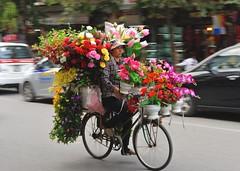 Hanoi flower seller (jeremyhughes) Tags: street city flowers urban woman floral bike bicycle cycling nikon cyclist sigma cargo laden vietnam florist vendor flowervendor hanoi load pedal loaded cornucopia flowerseller womanatwork pedalpower 70200mmf28 d700 workingbike