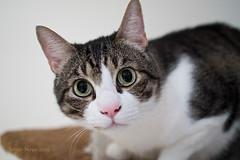 Morrut (nayosoval) Tags: sergio cat gatos olympus gato felino mascota naya 25mm nayoso nayosoval