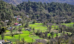 How green was my valley (mala singh) Tags: india mountains shimla village valley himalayas himachalpradesh