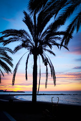Palm trees (apricot's) Tags: morning light tree sunrise dawn spain palm marbella