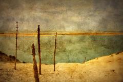 Monde futur (JEAN PAUL TALIMI) Tags: beach statue vent solitude dune sable vert arbre arcachon seul pila pyla bassindarcachon pilat aquitaine gironde dunedupyla grandemare talimi mondeperdu