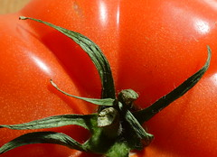 Red & Green (Tony Worrall Foto) Tags: red food color macro green nature closeup tomato rouge nice stem colours shine natural grow seed eaten eat slice colourful sunlit veg grown 2015tonyworrall