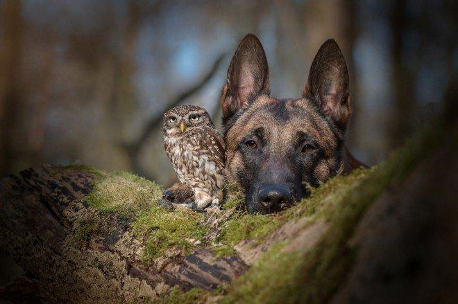 Une amitié hors du commun entre un chien et une chouette !