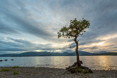 Lonely Tree (Loch Lomond) (Uillihans Dias) Tags: uk lake tree scotland unitedkingdom gb loch lochlomond