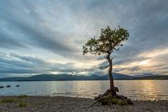 Lonely Tree (Loch Lomond) (Photography Revamp) Tags: uk lake tree scotland unitedkingdom gb loch lochlomond