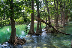 Medina River (sammi.wallace) Tags: blue river texas bandera medina mangroves medinariver banderatexas texasriver
