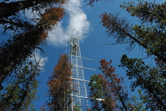 Energy, water and carbon dioxide measurements at Kennedy Siding Flux Tower (ubcmicromet) Tags: britishcolumbia wind turbulence temperature climate fluxnet kennedysiding tower carbondioxide climatechange eddycovariance mountainpinebeetle mountainpinebettle dendroctonusponderosae ubc theuniversityofbritishcolumbia