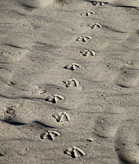 Footprints (Joe Josephs: 2,650,890 views - thank you) Tags: california travel pacificocean westcoast californiacoast fineartphotography californiacentralcoast pacificcoasthighway californiabeaches travelphotography californialandscape fineartprints joejosephs joejosephsphotography