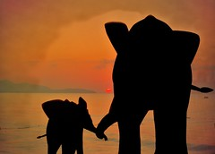 big and little on the beach (hans 1960) Tags: sun sunrise sonne silhouette elefant dreams trume texture compo tiere mutterundkind grosundklein big gr0s klein little mutter kind colours farben beach strand holyday wasser water wellen wave rauschen nature natur