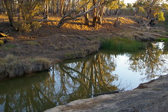 Reflections (Jan Diamond) Tags: reflections trees water drought