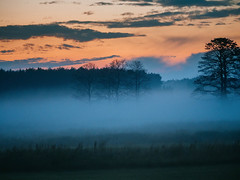Misty evening II (Radek Fluder) Tags: forrest trees polska tree cloud mist layers fog evening poland
