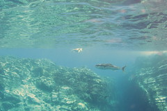 Raoul Island snorkelling (cathm2) Tags: newzealand kermadecs raoul island travel snorkelling underwater blue nature rock