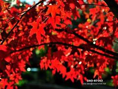 DAO-87163 (Chen Liang Dao  hyperphoto) Tags:   taiwan
