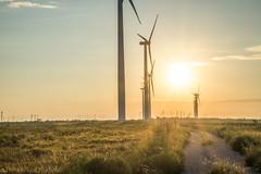 West Texas Morning (3 of 40) (mharbour11) Tags: wildcats elk purple sunrise westtexas texas sky windturbines windmill sun silhouettefire silhouette