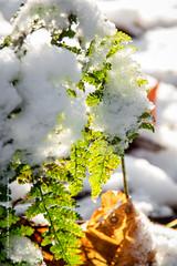 Snowshoot 28-12-2014 (25) (Thoran Pictures, Thx for more then 4 million views) Tags: snow photography pentax sneeuw models k3 modellen voorthuizen pentax18135mmwr madebythoranpictures theuseofanyoftheimagesinthissetwithoutpriorwrittenpermissionisprohibitedwiththeexceptionofpersonalusebytheindividualsportrayedtherein