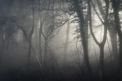 Eye Of The Needles (Russ Barnes Photography) Tags: trees winter mist fog forest woodland nikon cotswolds gloucestershire nikkor70200mmf4 russbarnes d800e