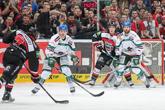 """DEL15 Kšlner Haie vs. Augsburg Panthers • <a style=""""font-size:0.8em;"""" href=""""http://www.flickr.com/photos/64442770@N03/15679883264/"""" target=""""_blank"""">View on Flickr</a>"""