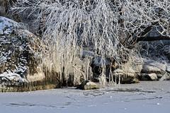 Cold but amazingly beautiful (kaffealskare) Tags: winter cold ice kyla vinter frosty icicles rimfrost istappar
