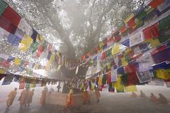The Hero's Journey  In Buddha's Footsteps (Leonid Plotkin) Tags: nepal religious asia buddha buddhist traditional prayer religion praying monk buddhism monks meditating meditation tradition prayerflag banyantree sacredtree bodhitree lumbini holytree