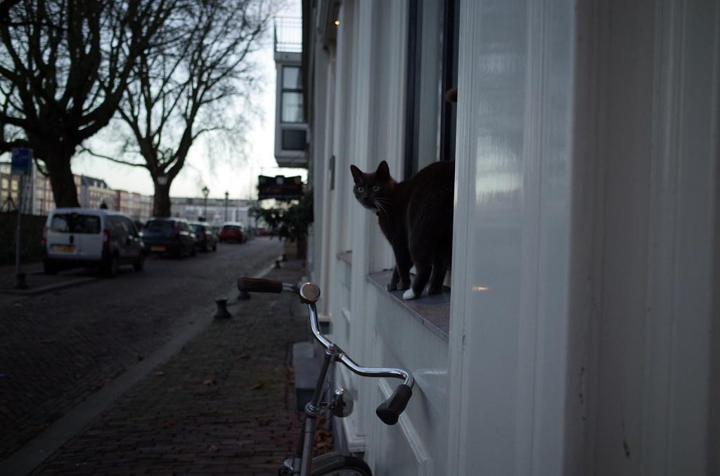 Delfshaven kitty