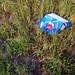Pepsi_1565