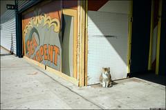 You Are Late (philippe blayo photography) Tags: street newyorkcity urban usa newyork brooklyn america coneyisland manhattan streetphotography amrique tatsunis photographiederue tatdenewyork