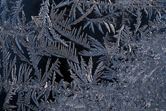 "Frost on glass 01082015 • <a style=""font-size:0.8em;"" href=""http://www.flickr.com/photos/59116537@N08/16229909222/"" target=""_blank"">View on Flickr</a>"