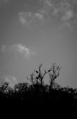 New Year, New Lens. (iinvinoveritass) Tags: life trees wild blackandwhite bw white black bird nature monochro