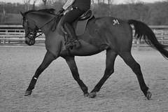 Markus (hope_deamer) Tags: horse photography grandprix clinic equine dressage