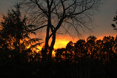 DSC_5057sunset (markstrohmjr) Tags: sunset sun tree landscape evening nikon settingsun glowingsun nikon1 nikon1j1