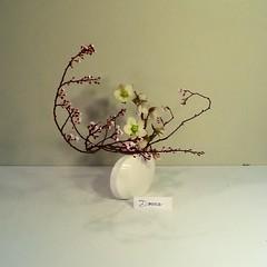 Donna's plum blossom
