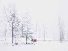 Foggy winter day. (Bessula) Tags: winter red mist snow tree nature landscape scenery sweden country hut fogg bessula