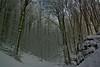 """il bosco delle ...fate !!! ("""" paolo ammannati """") Tags: snow raw neve 1001nights inverno verna bosco chiusidellaverna paoloammannati"""